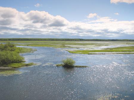 Natural lanscape width marsh Biebrza river in Poland. National Park.