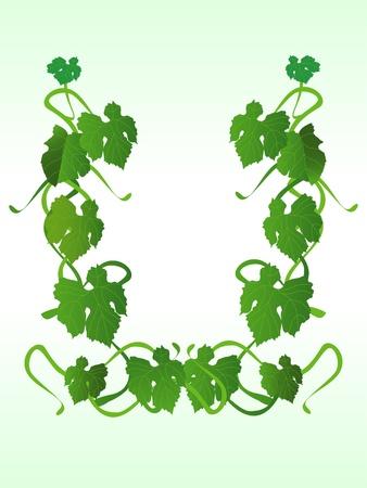 vine, green ornament
