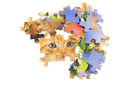 cat jigsaw puzzle pieces isolated over white Stock Photo