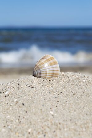 close up of sea shell partially dug in sand. Blue sea with incoming waves and blue sky visible in background