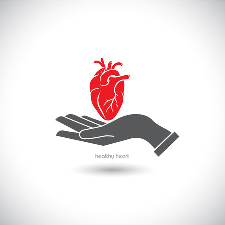 human anatomy: The vector image Web icon, the human heart in his hand. Illustration