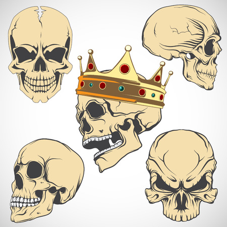 The vector image Set of vector skulls. Illustration