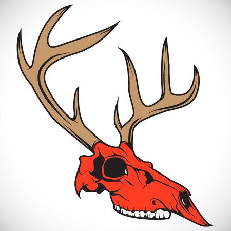 deer skull: The vector image The skull of a deer. Vector. Illustration