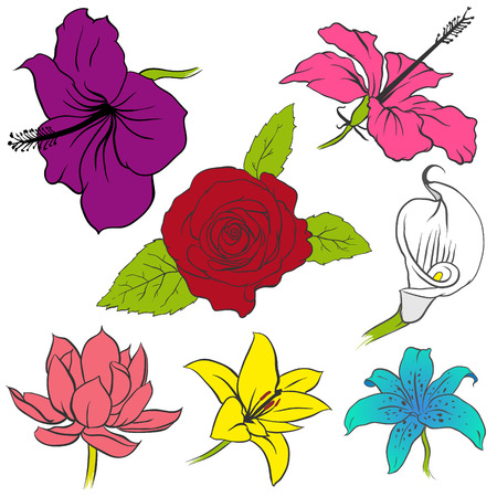 The vector image of Vector set of different flowers