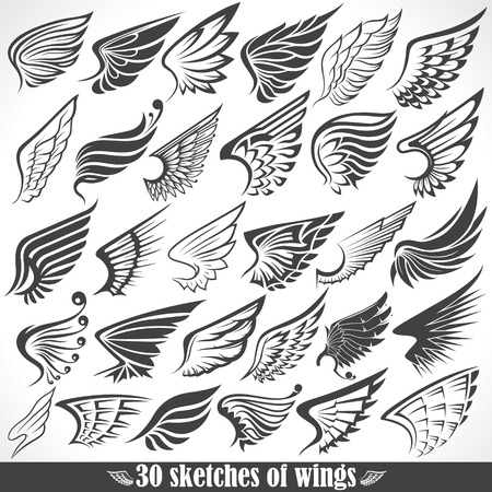 The vector image of Big Set sketches of wings Vector