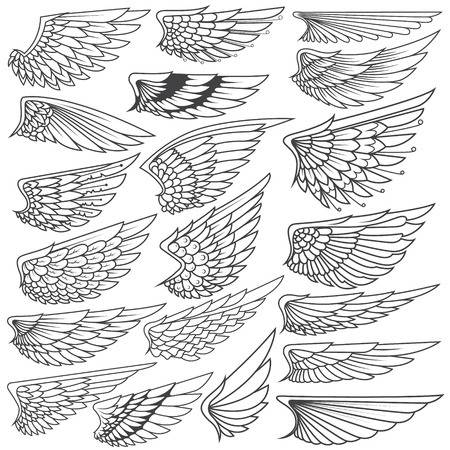 ide: Big Set sketches of wings