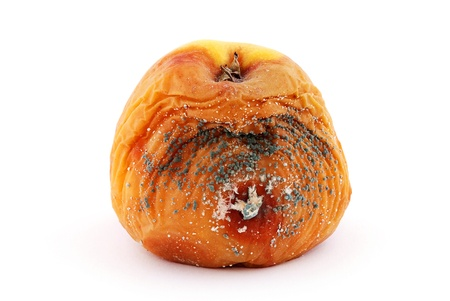 Rotten apple with a mold isolated on a white background photo