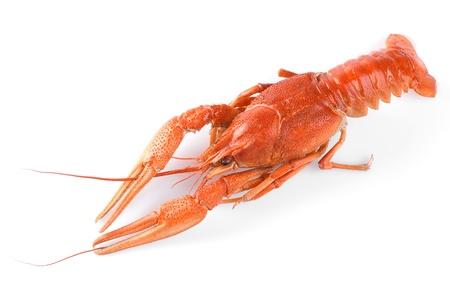 cancers: Boiled crawfish  Isolated on white background