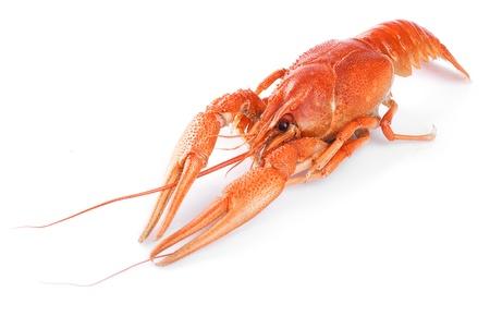 cancers: Boiled crawfish
