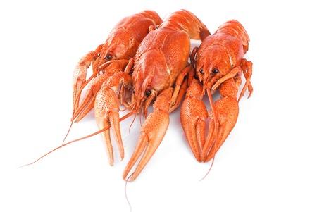 cancers: Boiled crayfish isolated on white background  Stock Photo