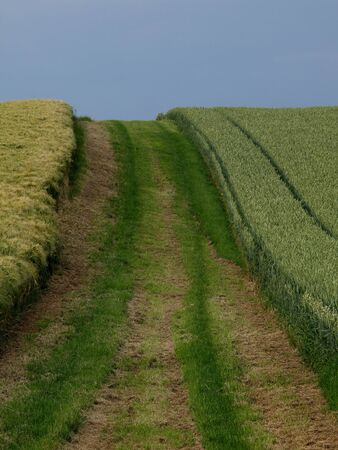 A path between a barley and a wheat field photo