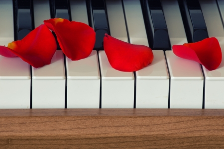 Scarlet rose petals is lying on piano keyboard photo
