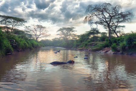 Morning landscape of African river and hippos family photo