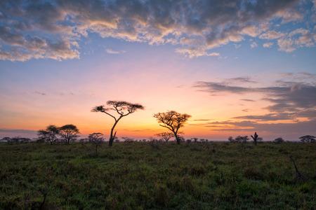 사바나에서 아름다운 일출의 판타지 아프리카 lanscape에