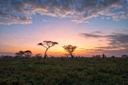 Fantasy African lanscape of the beautiful sunrise in savannah