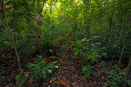 青々 とした葉を持つ美しいアフリカのジャングルの景色 写真素材