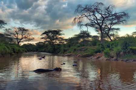 African landscape with savannah river and hippo family Stock Photo