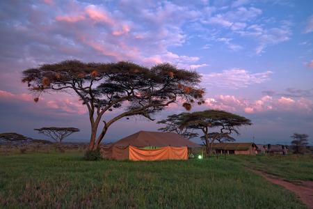 サファリ中にサバンナ キャンプでテントの中で一晩