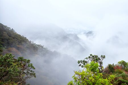 tropical evergreen forest: Scenic view of tropical mountain fog forest