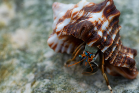 exoticism saltwater fish: Hermit crab is hiding in the sea shell Stock Photo