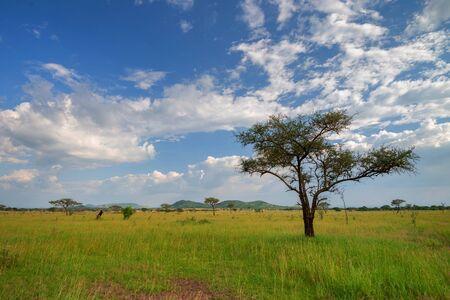 Scenic afrikanische Savannenlandschaft mit drammatic Himmel