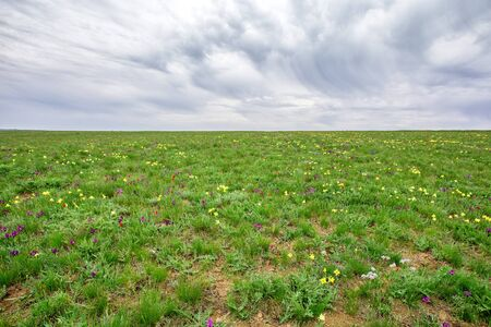 Landscape with spring steppe covered with blossoming wild flowers