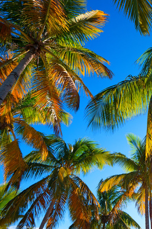 Paradise tropical beach with a palm tree in the evening Foto de archivo