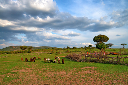 greem: Picturesque savanna landscape with maasai village