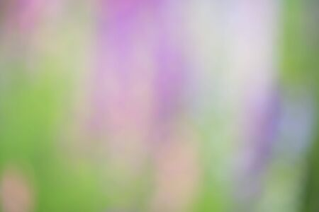 green purple: Blurred green, purple and pink background scene