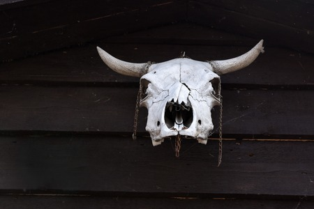 cow skull: Aged cow skull hanging on wooden post Stock Photo