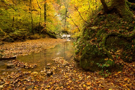 thicket: Autumn forest with stream flowing through the thicket Stock Photo