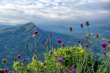 dagestan: Scenic mountain landscape with thistle flowers blossoming on background of highlands and dramatic sky