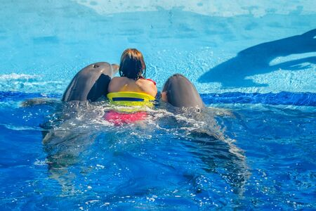 Common dolphin playing with kids in pool with blue water