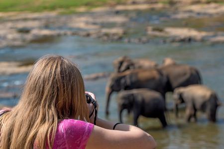 Cute young female wildlife photographer during safari making photos of elephants Stock Photo