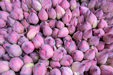 nucifera: Lotus or Nelumbo nucifera