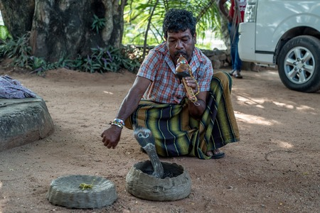 charmer: Snake charmer plays with indian cobra