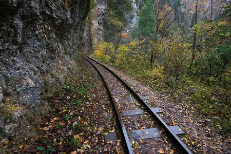 ferrocarril: Las vías del ferrocarril cortar a través de las maderas del otoño