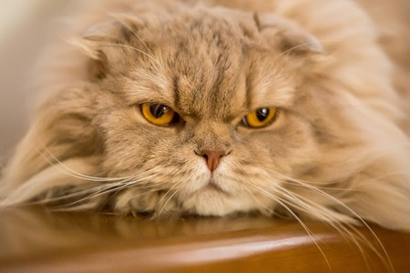 stray: Close-up of domestic cat