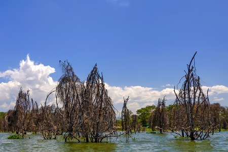 adult kenya: Peaceful view on lake Naivasha in Kenya Stock Photo