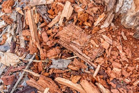 rotting: Rotting tree stump background Stock Photo