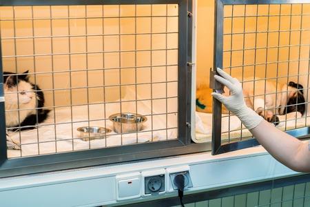 Mascotas convalecientes en el hospital veterinario