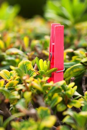 Plastic clothespin on bush Stock Photo
