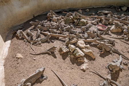 animal den: Many green iguana on ground