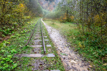 railroad: Railroad tracks cut through autumn woods