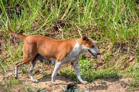waif: Stray dog walks