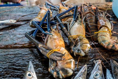Raw freshwater jumbo shrimp Stock Photo