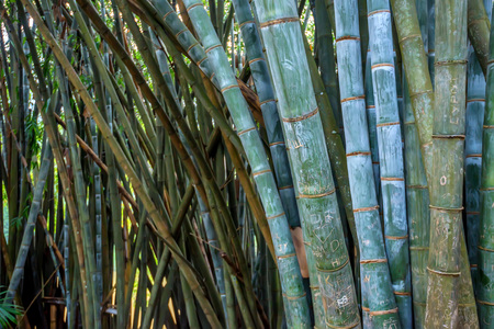 vandal: Bamboo with vandal scripts in natural environment Stock Photo