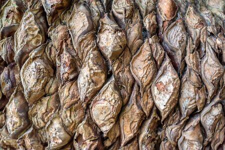 cycad: Old cycad bark macro
