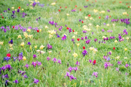 Spring landscape with blossoming wild flowers Stock Photo