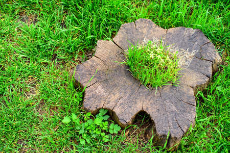 Stump with moss in grass